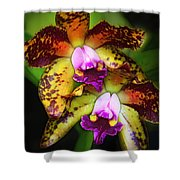 Orchid Elegance Shower Curtain