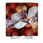 Orchid Flower Photographic Art Shower Curtain