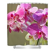 Orchid Flowers Art Prints Pink Orchids Shower Curtain