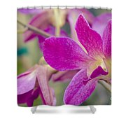 Orchid - Haliimaile Spring Pink Shower Curtain