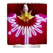 Orchid Harlequinn-pansy Orchid Shower Curtain