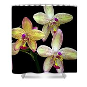 Orchid In Blossom Shower Curtain