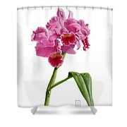Orchid - Lc. Culminant La Tuilerie Shower Curtain