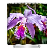 Orchid Life Shower Curtain