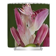 Orchid Mantis Shower Curtain