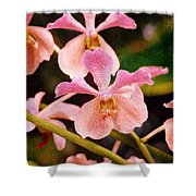 Orchid Number 17 Shower Curtain