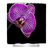 Orchid On Black Background Shower Curtain