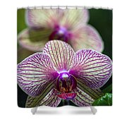 Orchid One Shower Curtain