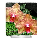 Orchid Pair Shower Curtain