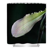 Orchid Petal Shower Curtain