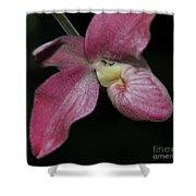 Orchid Phragmipedium Hanna Popow 2 Of 2 Shower Curtain