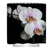 Orchid Portrait Shower Curtain