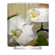 Orchid Purity Shower Curtain