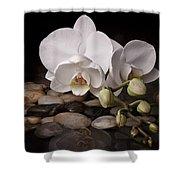 Orchid - Sensuous Virtue Shower Curtain