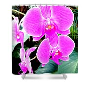 Orchid Series 1 Shower Curtain