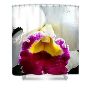 Orchid Series 2 Shower Curtain