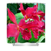 Orchid Series 3 Shower Curtain