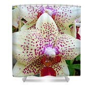Orchid Series 5 Shower Curtain