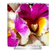 Orchid Series 6 Shower Curtain