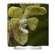 Yellow Dragon Orchid Shower Curtain