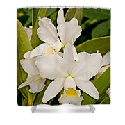 Orchid Sophronitis Shower Curtain
