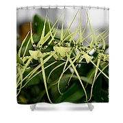 Orchid Spikes Shower Curtain