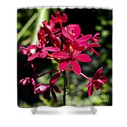 Orchid Study V Shower Curtain