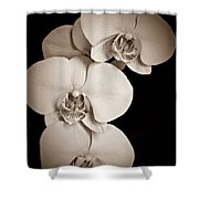 Orchid Trio Sepia Shower Curtain
