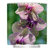 Orchid Two Shower Curtain