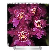 Orchid Vuylstekeara Aloha Passion Shower Curtain