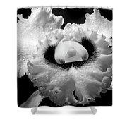 Orchid With Black Wings Shower Curtain