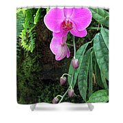 Orchid2705 Shower Curtain