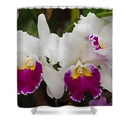 Orchids 198 Shower Curtain