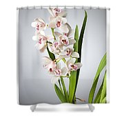 Orchids 4 Shower Curtain