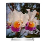Orchid Elsie Sloan Shower Curtain