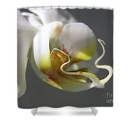 Orchid's Face Shower Curtain
