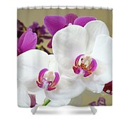Orchids Floral Art Prints White Pink Orchid Flowers Shower Curtain