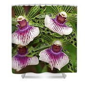 Orchids Four Shower Curtain