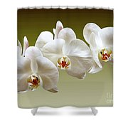 Orchids In Green Shower Curtain