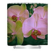 Orchids In Pink And Green Shower Curtain