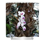 Orchids In The Opryland Hotel In Nashville Tennessee Shower Curtain