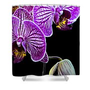 Orchids On Black Background Shower Curtain