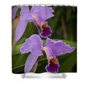 Orchids Pictures 1 Shower Curtain