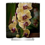Orchids Pictures 10 Shower Curtain