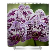 Orchids Pictures 11 Shower Curtain
