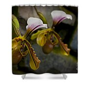 Orchids Pictures 30 Shower Curtain
