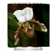 Orchids Pictures 31 Shower Curtain
