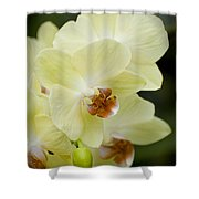 Orchids Pictures 34 Shower Curtain