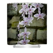Orchids Pictures 47 Shower Curtain