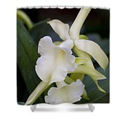 Orchids Pictures 53 Shower Curtain